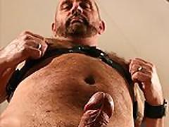 Big-Nobbed Hairy Bear